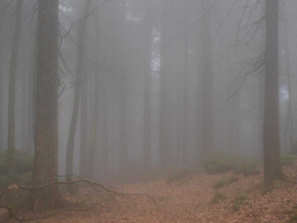Wie Hanna zum Rotkäppchen im Walde wurde