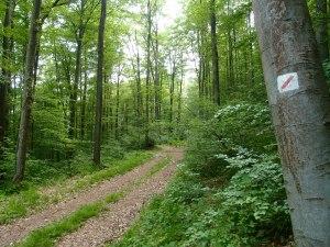 Saugut gekennzeichneter örtlicher Wanderweg vom Wanderverein Spessart.