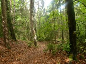 Wald wald Wald! Sieht aber sonniger aus als es ist