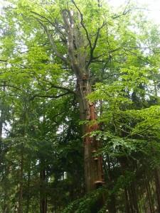 Der Frankenwald, sonst von Nadeln dominiert, aber ab und an finden sich auch Prachtexemplare anderer Art.