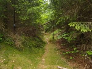 Zwischen den vielen Forstwegen gibt es aber auch ein paar schöne Wege