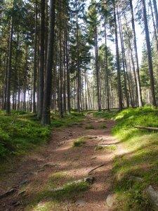 Die ersten schönen Waldwege, von Sonnenlicht durchflutet