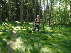 Wanderpapa im feenhaft anmutender Waldlandschaft