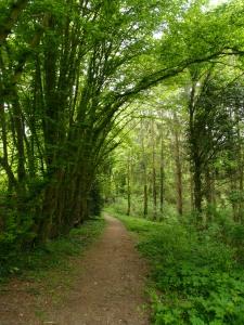 Regionaler Wanderweg A2, durch lichten Laubwald zur Wupper!