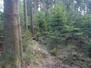 Rumirren im Wald