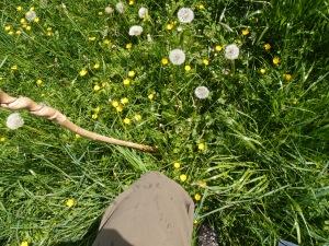 Der Weg endet in der Blumenwiese - noch macht's mir richtig Spaß!