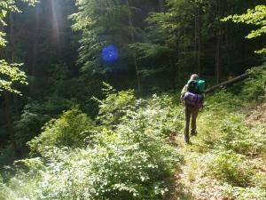 Dichter Wald, Sonne, herrlich!