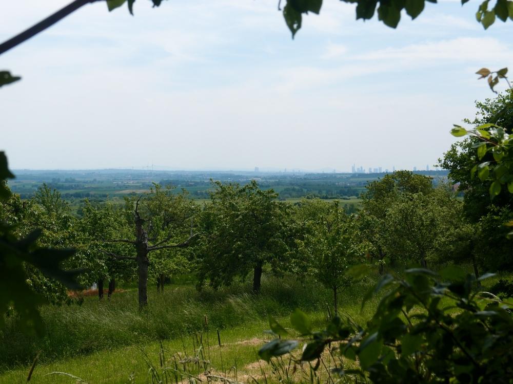 Die Heimat eingerahmt in Grün: Die Skyline Frankfurts ganz hinten am Horizont