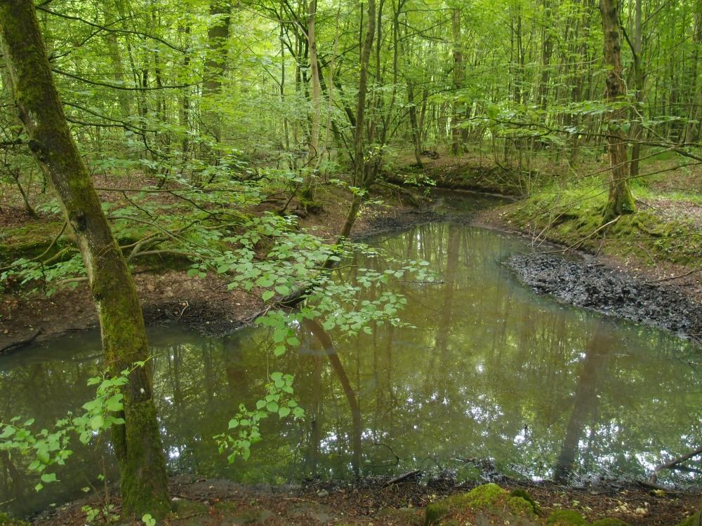 Die Auenwälder bei Erlensee sind mindestens einmal im Jahr überschwemmt