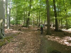 Aber alles ganz wunderschön durch den Wald :-D