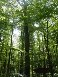 Lieblicher Wald