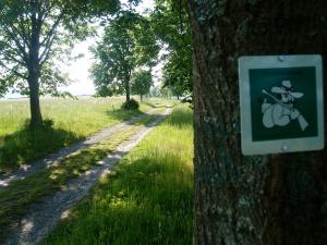 Nach kurzem Anstieg aus Rothenbuch raus - auf dem Hasenstabweg über eine schöne Wiesenebene
