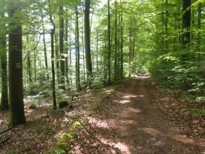 Über gemütliche Wege durch den sonnendurchfluteten Wald kann ich mich wieder freuen