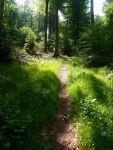 Schön ist er der Spessart, aber auch steil: Nach Kilometer langem Anstieg über einen breiten Schotterweg, ein süßer kleiner Pfad...