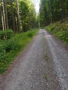 Man sieht es vielleicht nicht, aber dieser Weg führt 3 km aufwärts - einer der Momente, wo ich fast verzweifel