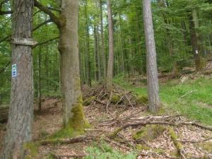 Zwischen Schollbrunn und diesem Schild lagen noch 3-4 km, doch dann - das erste Mal ist Hasselberg ausgeschildert!